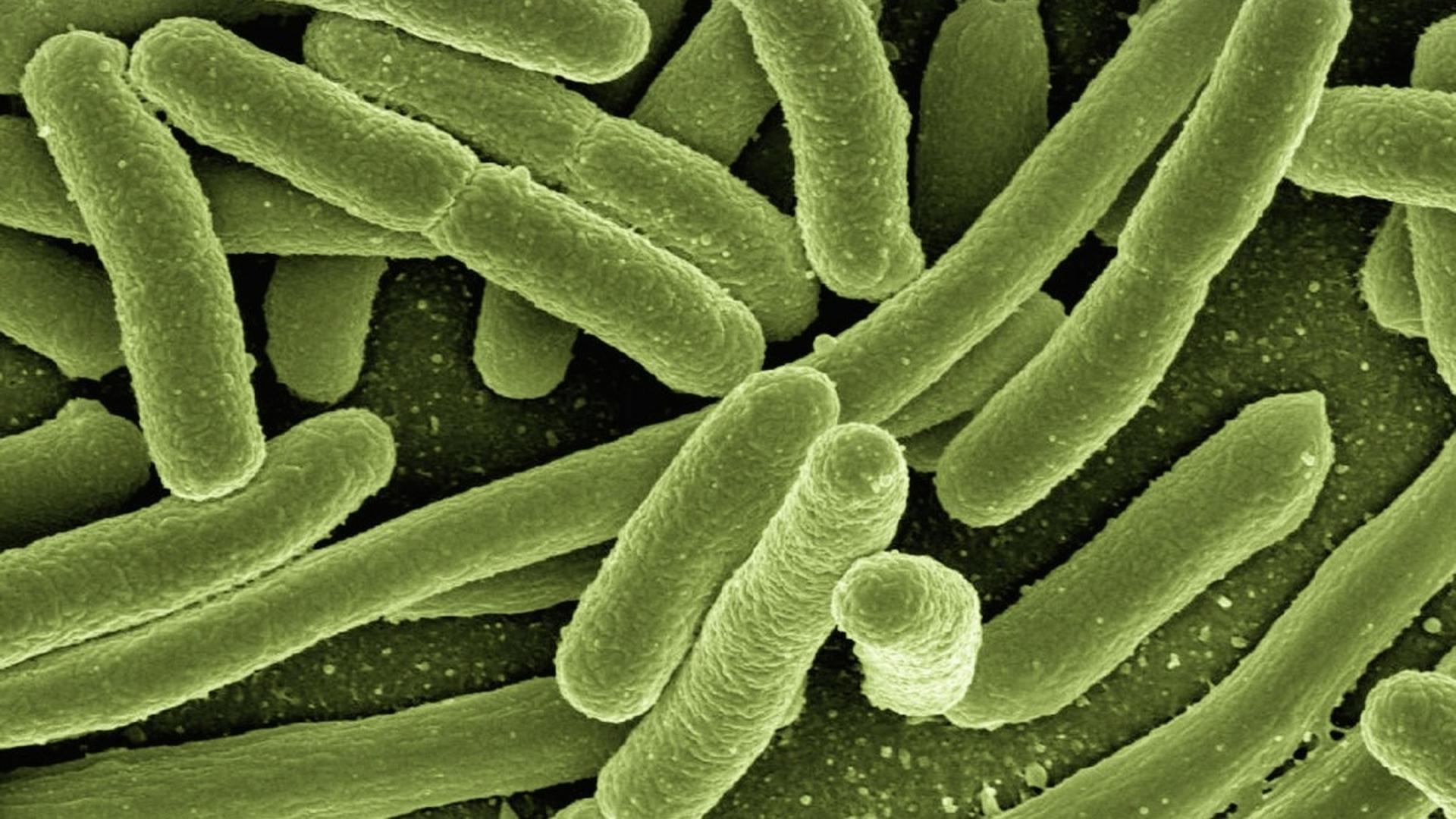 Микроб из Тихого океана и загадка происхождения сложных клеток