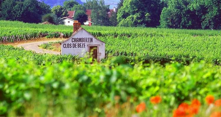 Любимое вино Наполеона и Казановы — Шамбертен
