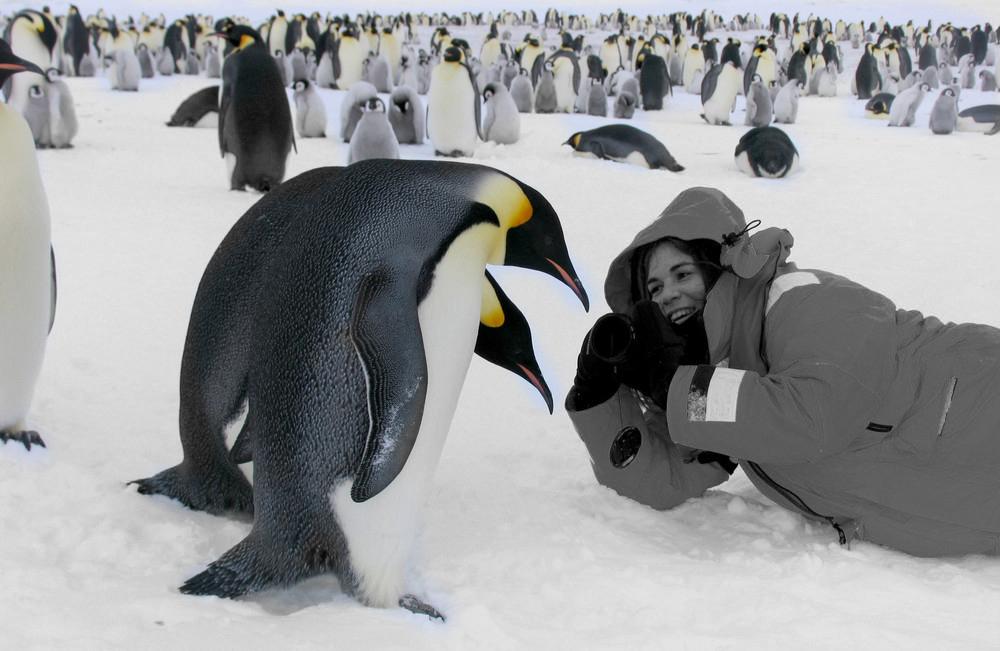Вакансии мечты в открытом доступе: считать пингвинов, жить в доме МакКартни
