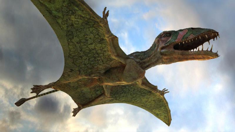 Как птицы заняли место вымерших динозавров?