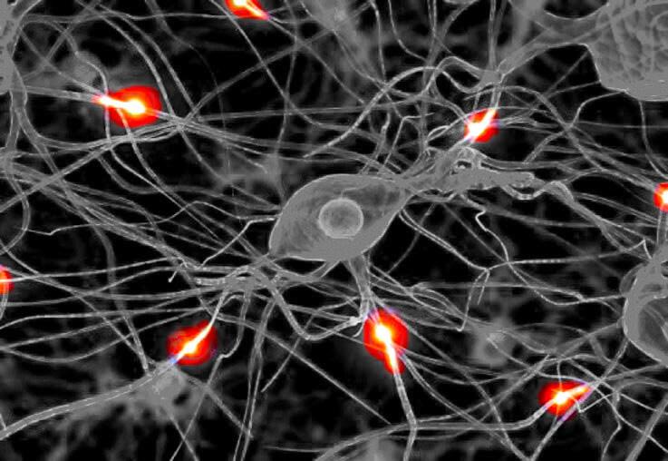 Восстановление невосстановимого: регенерация нейронов