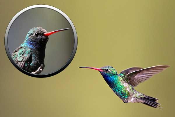 Тетрахроматия: почему по сравнению с колибри все люди дальтоники?