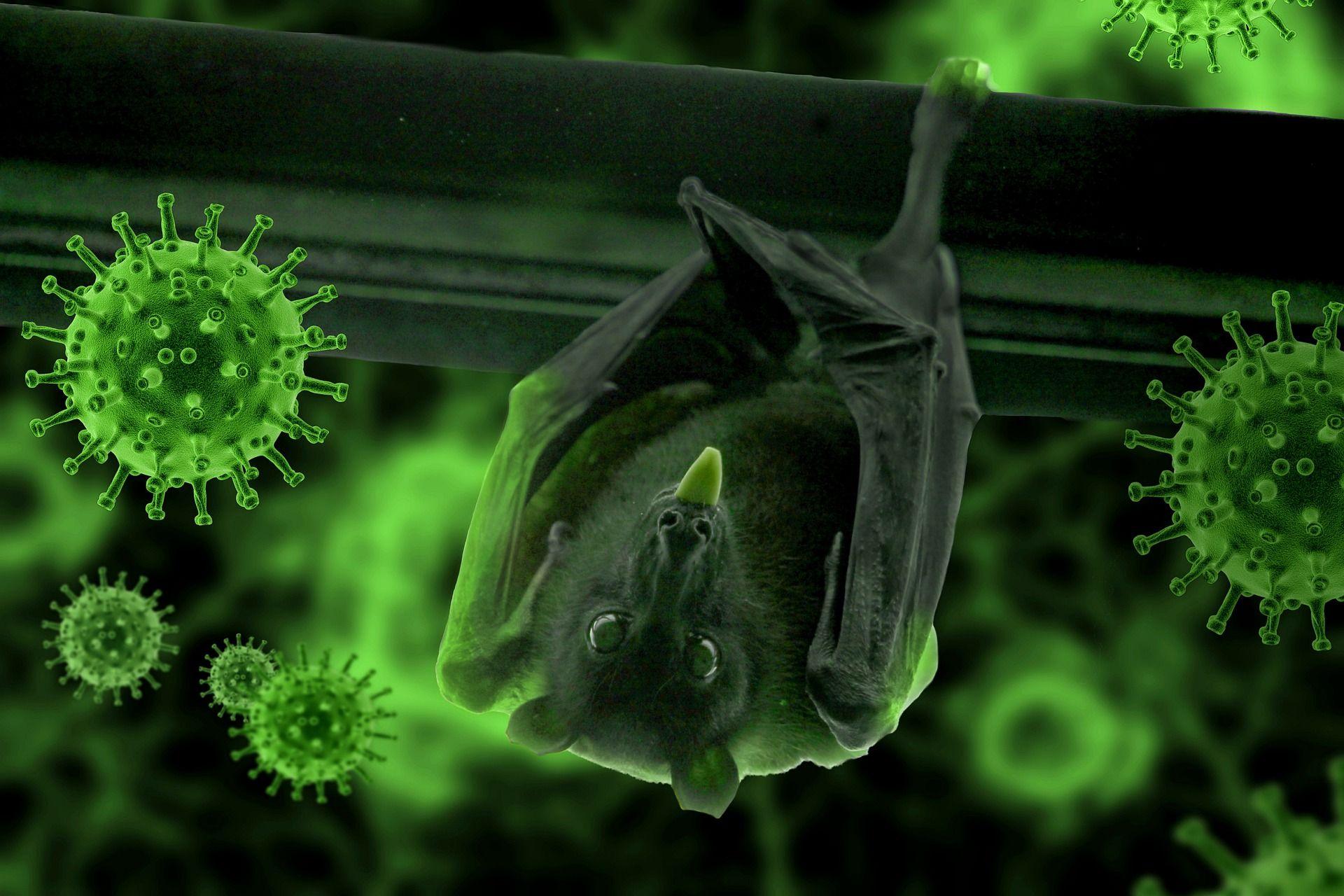 Супер-иммунитет летучих мышей: исследования идеального переносчика коронавирусов