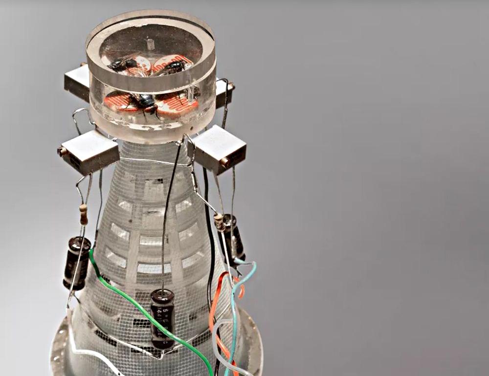 Странные арт-работы, вдохновленные наукой: ухо на руке и разнополые роботы