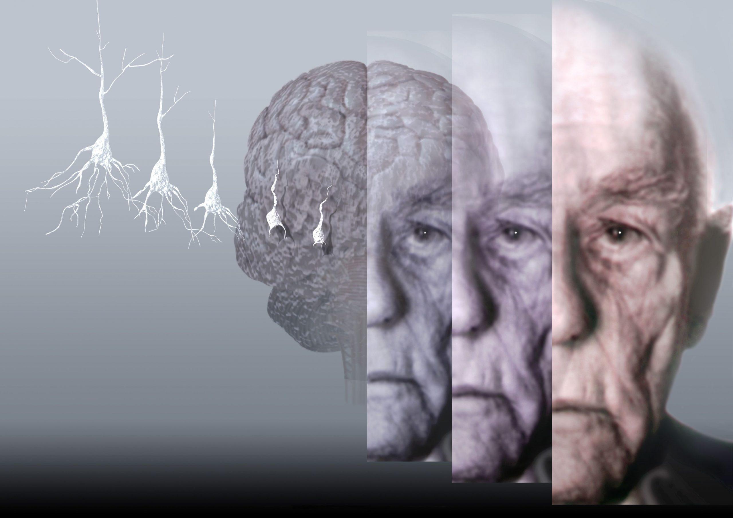 Когнитивные способности: почему пострадали беби-бумеры и что делать?