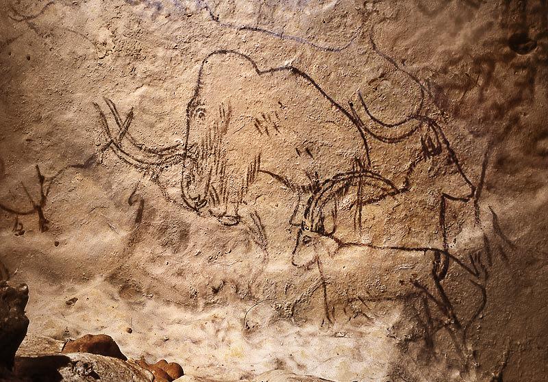 Самый древний образец ДНК показывает – как эволюционировали мамонты
