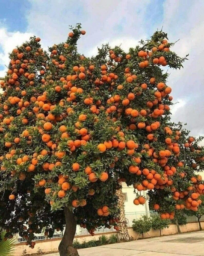 НЕТРИВИАЛЬНОЕ РЕШЕНИЕ: Как приучить пить апельсиновый сок?
